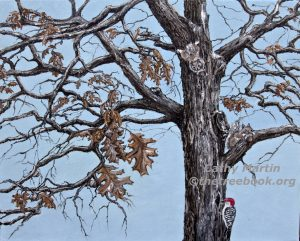 Pin Oak by artist Cathy Martin