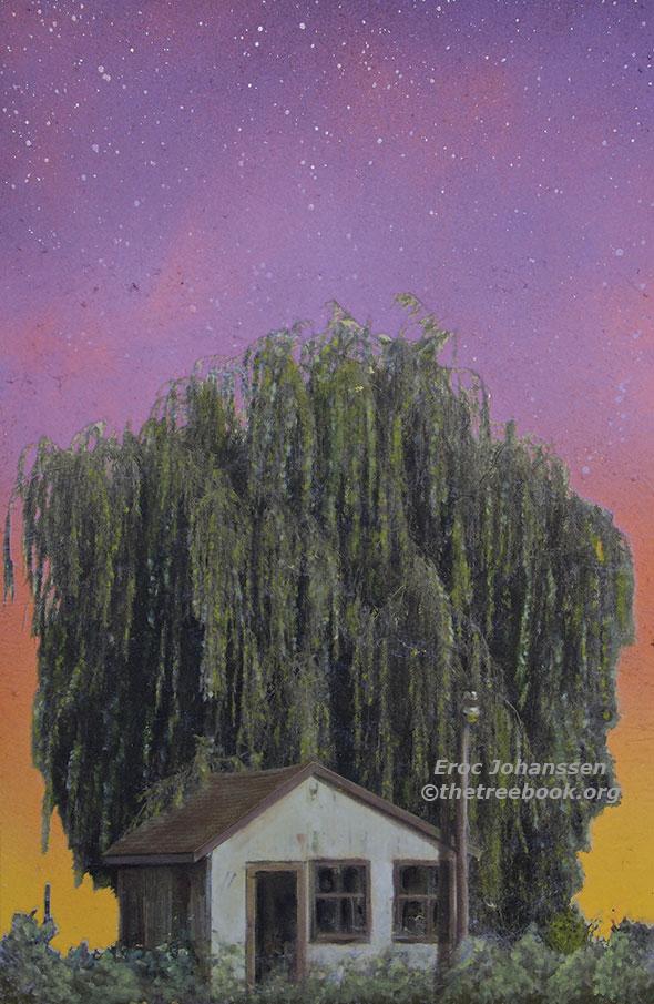 Willow by artist Eroc Johanssen the Treebook Project