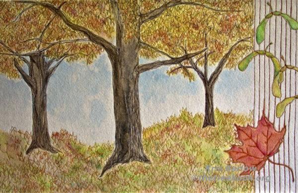 Sugar Maple by artist Kris Barlow The Treebook Project