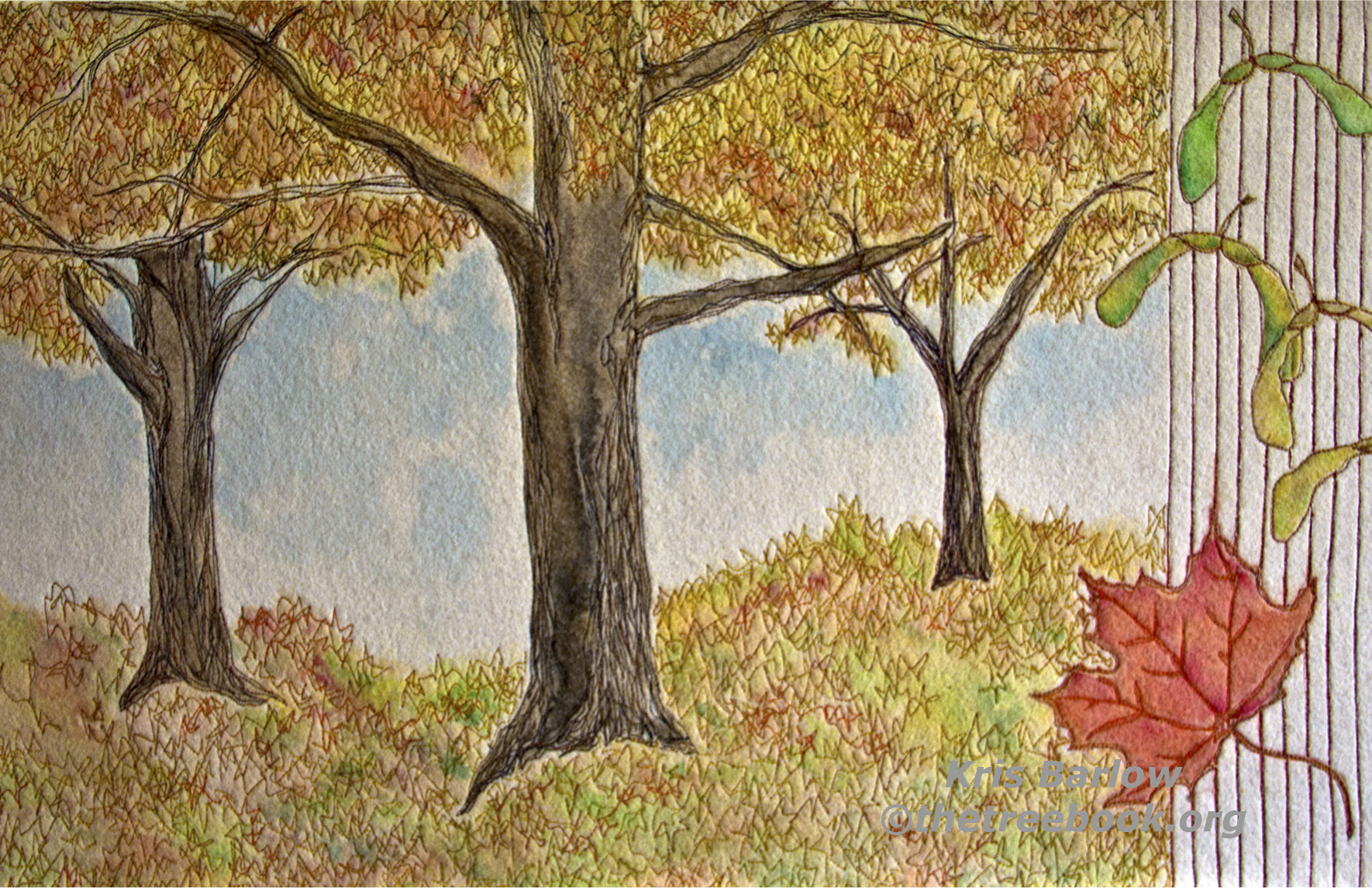 Sugar Maple by artist Kris Barlow The Treebook Project