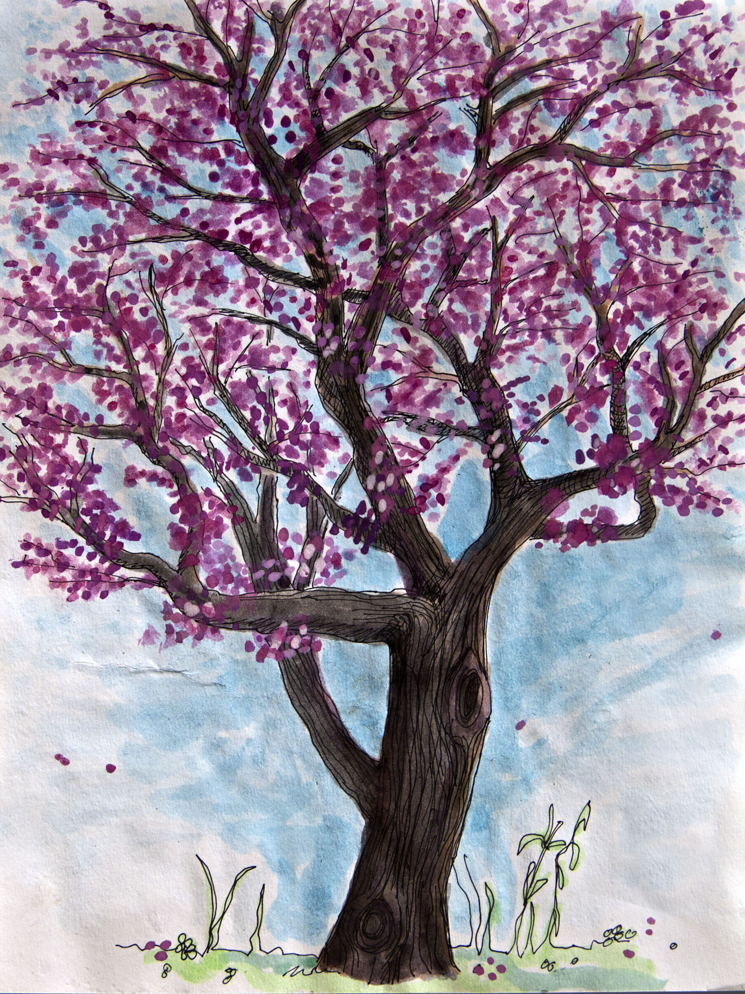 Red Bud by Lauretta Hendricks Backus the Treebook Project