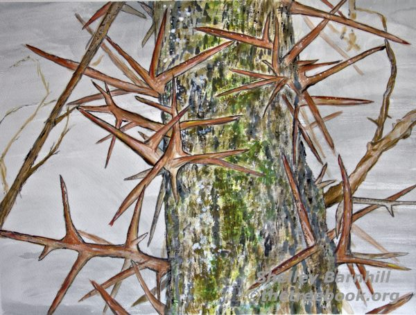 Locust by artist Shelley Barnhill The Treebook Project